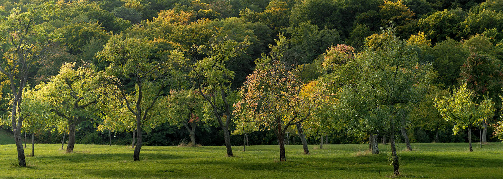 Wide shot of a field covered with grass and full of beautiful trees captured in day time